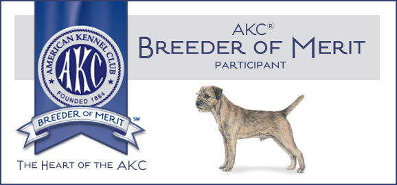 Full Throttle Border Terriers In Pocatello Idaho